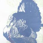 Wilde kalkoen, totemvogel van de 27ste Gene Key copyright Tanfana's Twinflame