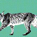 Lynx, totemdier van de 62ste Gene Key