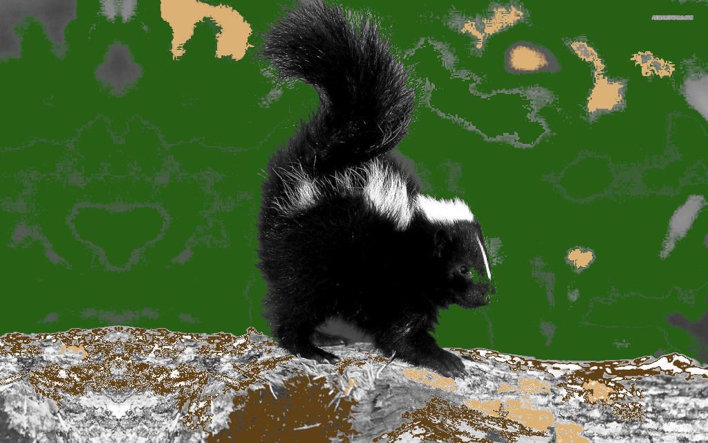 Stinkdier als totemdier van de 20ste Gene Key