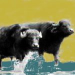 Buffel, totemdier van de 45ste Gene Key