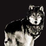 Wolf totemdier van de 12de Gene Key