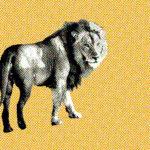 Leeuw, totemdier van de 25ste Gene Key