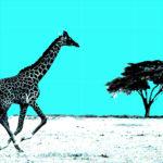 Giraf, Totemdier van de 17de Gene Key
