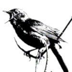 Nachtegaal, totemvogel van de 12de Gene Key